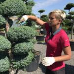 Jaká jsou pravidla pro vodní prvky v japonských zahradách